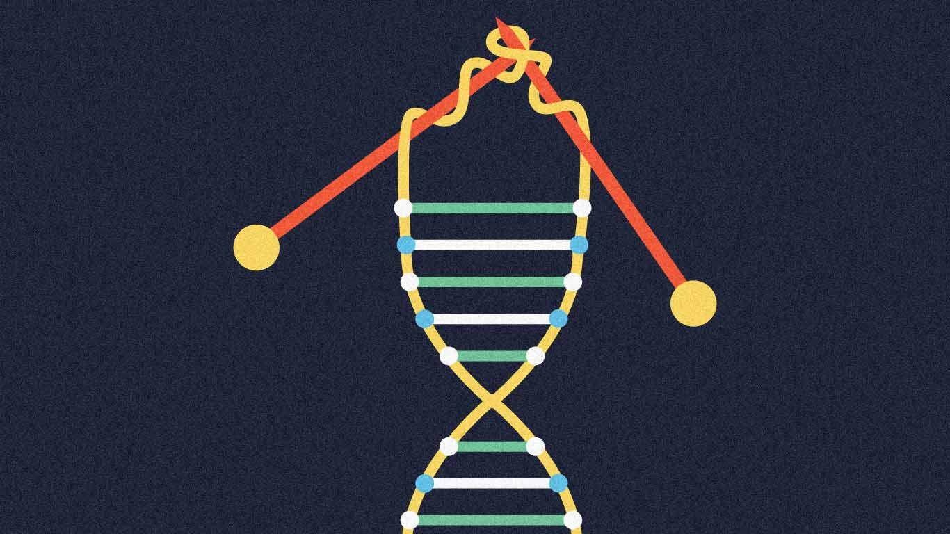 El Efecto Telómero: cómo vivir más sanos y retrasar el envejecimiento (Premio Nobel)
